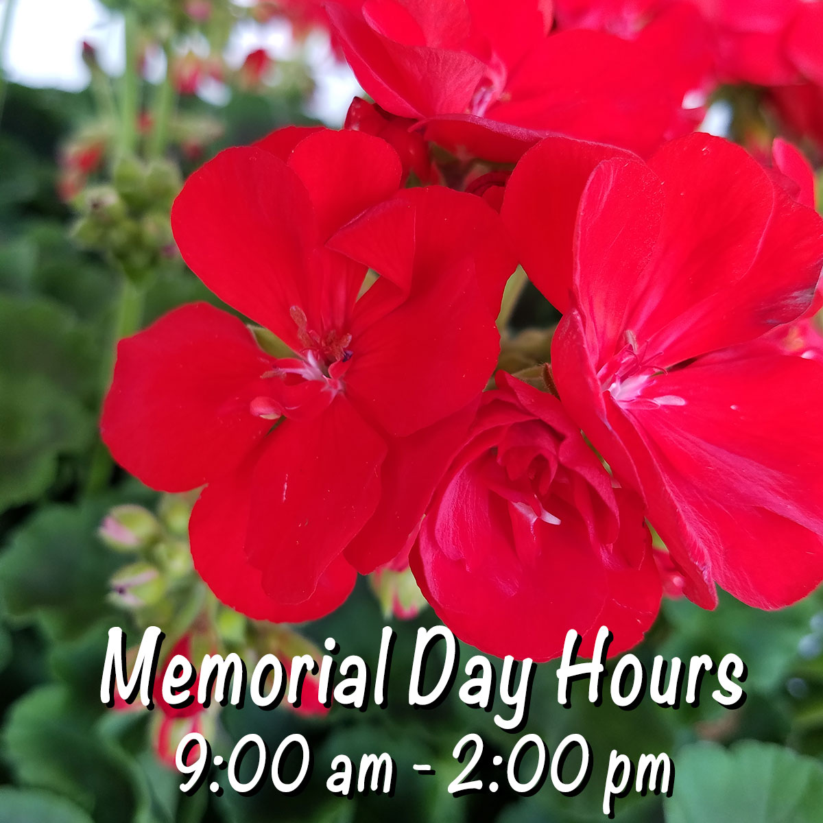 Memorial Day Hours: 9 am - 2 pm